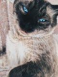 Ojos azules foto de archivo libre de regalías