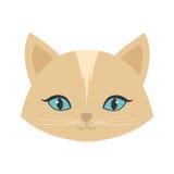 ojos azules femeninos del gato de la cara de la belleza imagen de archivo