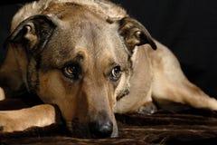 Ojos cariñosos Foto de archivo libre de regalías