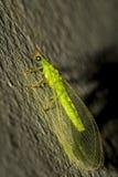 Ojos coloridos Foto de archivo libre de regalías