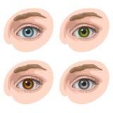 Ojos con diversos colores