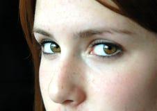 Ojos de Brown Imagenes de archivo