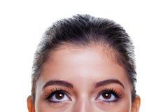 Ojos de Brown que miran para arriba Fotografía de archivo libre de regalías