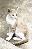 Ojos de color verde amarillo (gato) foto de archivo