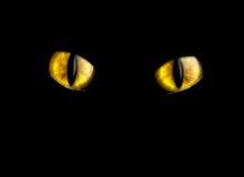 Ojos de gato Fotos de archivo