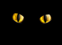Ojos de gato libre illustration