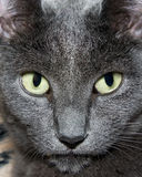Ojos de gato foto de archivo