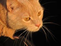 Ojos de gato Imagenes de archivo
