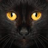 Ojos de gato negro macros Imagen de archivo libre de regalías