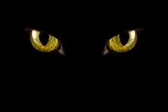 Ojos de gato que brillan intensamente en la obscuridad Fotos de archivo