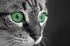 Ojos de gato verdes Imágenes de archivo libres de regalías