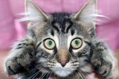 Ojos de gatos imagen de archivo libre de regalías
