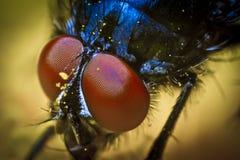 Ojos de la mosca Fotos de archivo libres de regalías