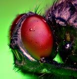 ojos de la mosca imagen de archivo