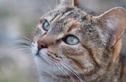 Ojos de la turquesa Imagen de archivo libre de regalías
