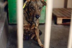Ojos de mirada tristes del perrito en la jaula del refugio, mamá emocional infeliz Fotos de archivo