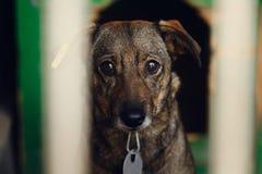 Ojos de mirada tristes del perrito en la jaula del refugio, mamá emocional infeliz Imagen de archivo libre de regalías