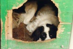 Ojos de mirada tristes del perro grande en jaula del refugio, momen emocionales tristes Fotos de archivo