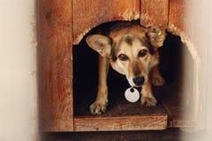 Ojos de mirada tristes del perro grande en la jaula del refugio de la perrera, emotiona triste Foto de archivo