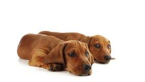Ojos de perritos almacen de metraje de vídeo