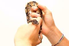 Ojos de serpiente Foto de archivo libre de regalías