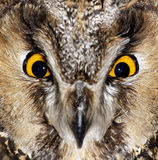 Ojos de un buho de águila 1 Imágenes de archivo libres de regalías