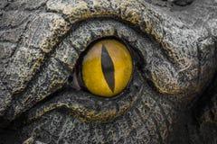 Ojos del amarillo de cocodrilos imagenes de archivo