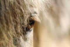 Ojos del caballo foto de archivo libre de regalías
