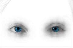 Ojos del cedazo Imagen de archivo libre de regalías