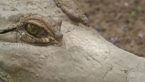 Ojos del centelleo del cocodrilo del Orinoco, Colombia almacen de metraje de vídeo