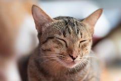 Ojos del cierre del gato de Brown, gato el dormir imagen de archivo