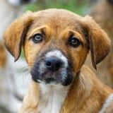 Ojos del perrito imagen de archivo