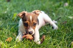 Ojos del perrito que adoran Fotos de archivo libres de regalías