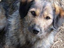 Ojos del perro callejero fotografía de archivo