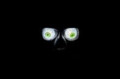 Ojos fantasmagóricos Foto de archivo libre de regalías