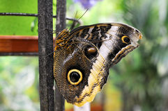 Ojos hermosos de la mariposa Fotografía de archivo libre de regalías