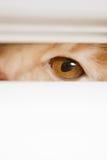 Ojos hermosos que miran furtivamente sobre el gato fuera de Imagen de archivo