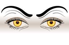 Ojos malvados amarillos Imágenes de archivo libres de regalías