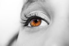 Ojos profundos de la mirada Imágenes de archivo libres de regalías