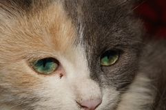 Ojos verdes Foto de archivo