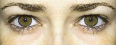 Ojos verdes claros Imágenes de archivo libres de regalías