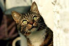 Ojos verdes de la mirada furtiva del gato fotografía de archivo