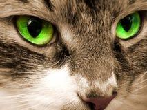 Ojos verdes de un gato Imágenes de archivo libres de regalías