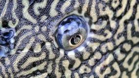 Ojos y boca de pescados almacen de video
