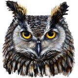 Ojos y pico de Eagle Owl Imagen de archivo libre de regalías