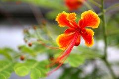 Okänd blomma Arkivbild
