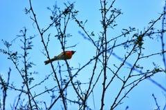 Okänd fågel Fotografering för Bildbyråer