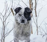 Okänd hund Arkivfoto