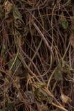 Okänd växt för busksnår Arkivfoto