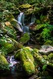 Okänd vattenfall i Smokiesen royaltyfri fotografi
